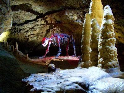 Höhlenbär in der Teufelshöhle